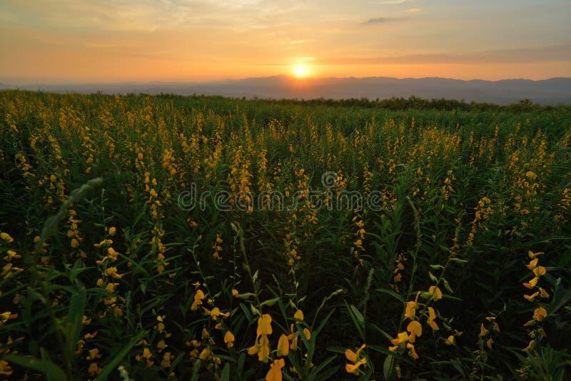 Abendblumenfeld stockbild