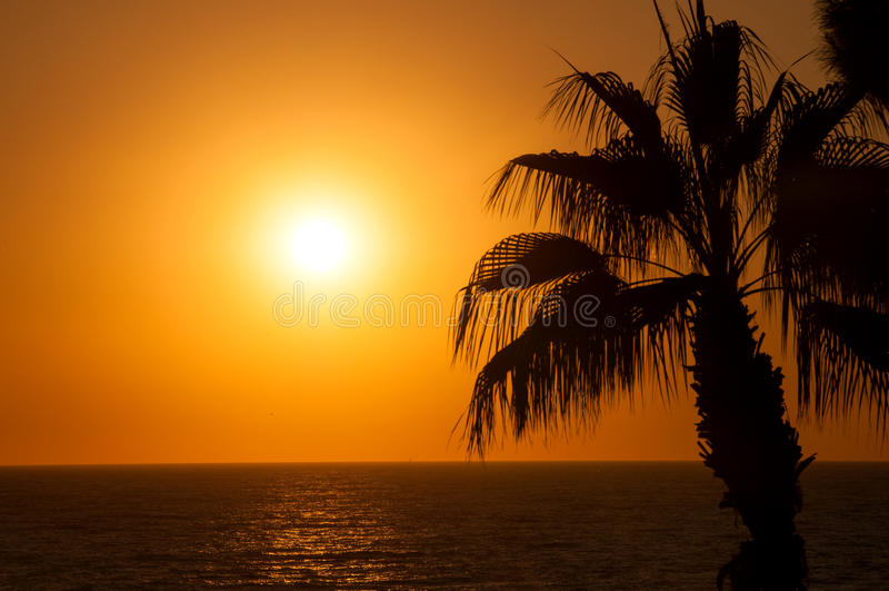 Abendmeer, Palmen stockfotos