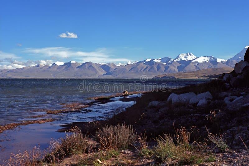 Abendschatten auf dem Ufer von heiligem Manasarovar See in Tibet stockbild