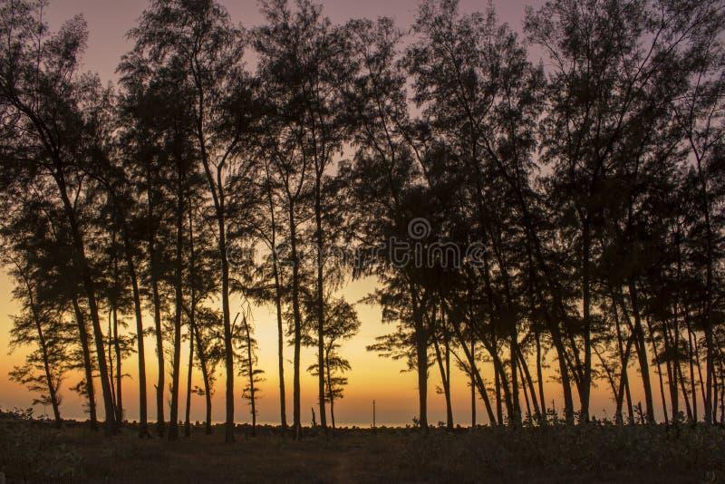Abendwald, dunkle Schattenbilder von Koniferenbäumen vor dem hintergrund der Seepromenade mit tetrapods unter einem hellen stockfotos