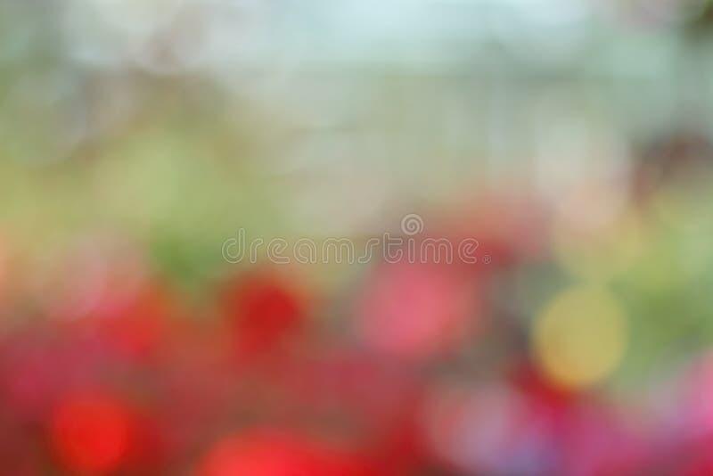 Abendwald mit bokeh lizenzfreies stockfoto