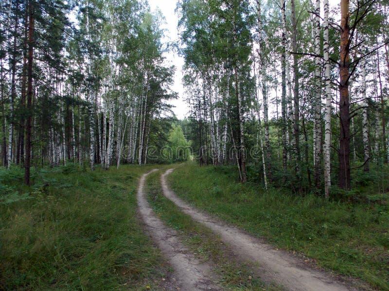 Abendwald und die Straße durch das Grün lizenzfreie stockfotografie