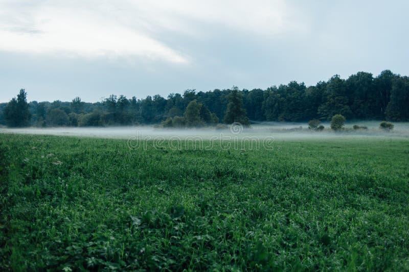 Abendwaldnebel, zum zur Reinigung zu gehen stockfoto
