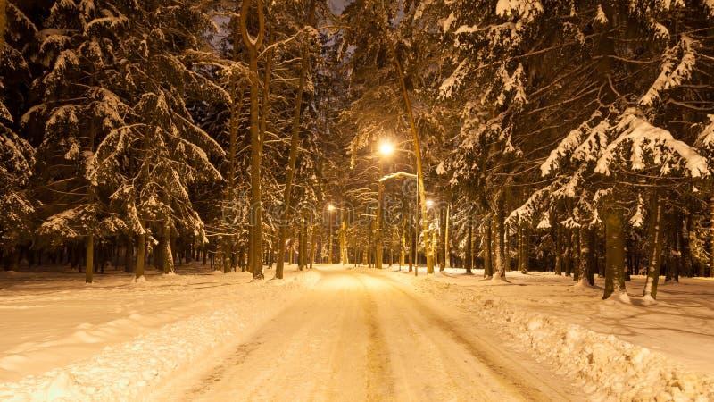 Abendwinter-Stadtpark mit Straßenbeleuchtung stockbild