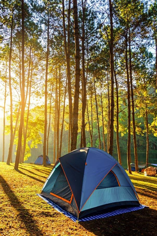 Abenteuerkampieren und -zelt unter dem Kiefernwald nahe dem Wasser im Freien am Morgen und am Sonnenuntergang am Schmerzgefühl-un stockbilder