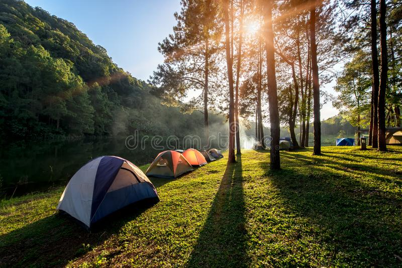 Abenteuerkampieren und -zelt unter dem Kiefernwald nahe dem Wasser im Freien am Morgen und am Sonnenuntergang am Schmerzgefühl-un stockfotografie