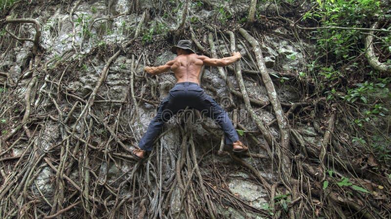 Abenteuermann in der natürlichen Dschungelturnhalle stockbilder