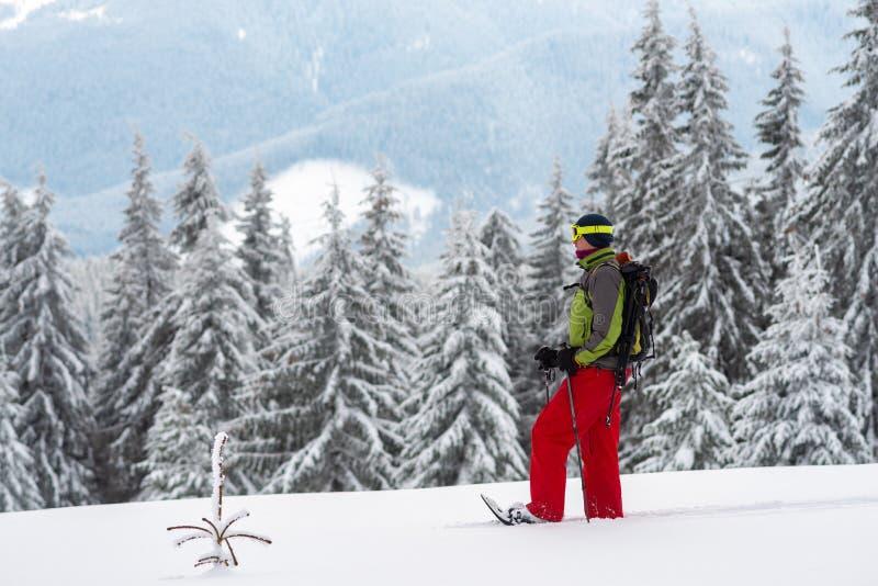 Abenteurer in den Schneeschuhen steht unter enormen Kiefern stockbilder