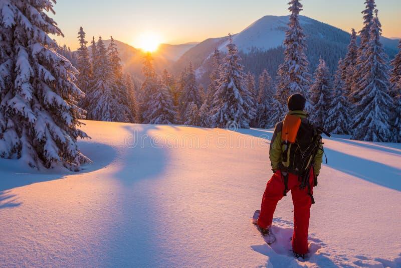 Abenteurer in den Schneeschuhen steht unter enormen Kiefern lizenzfreies stockfoto