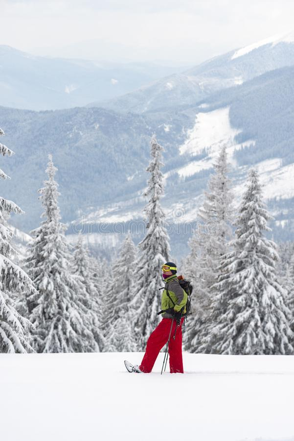 Abenteurer in den Schneeschuhen steht unter enormen Kiefern stockbild
