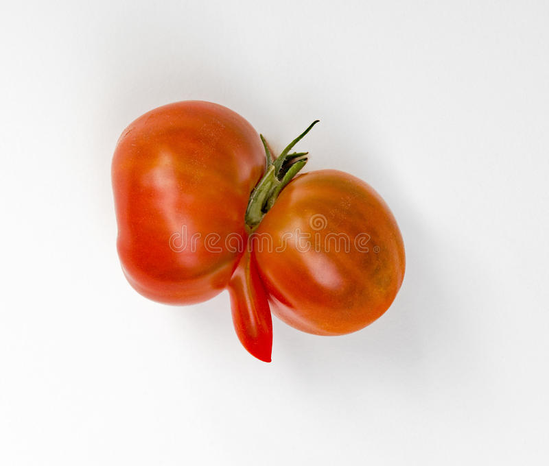 Aberrant Tomato. Two red tomatoes grown together with third appendage royalty free stock photo