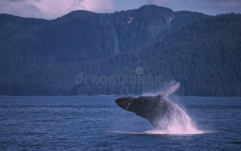 Abertura de la ballena fotos de archivo libres de regalías