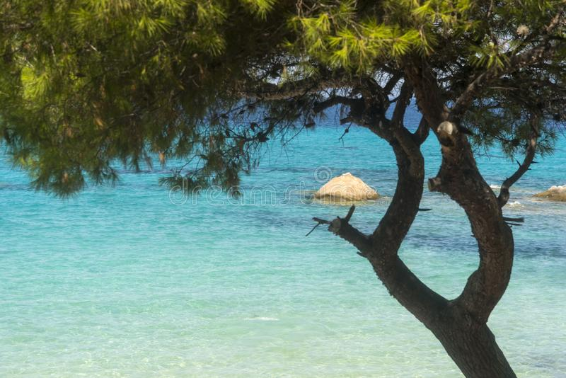 Abetaia sulla spiaggia di estate fotografia stock
