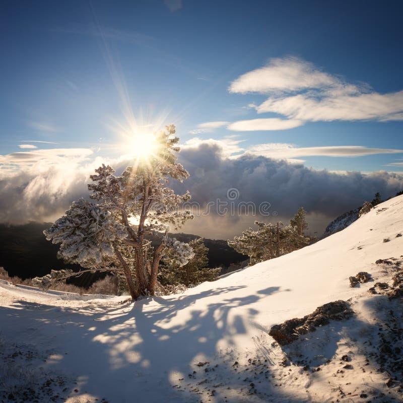 Abete nella neve contro il cielo blu con le nuvole immagine stock