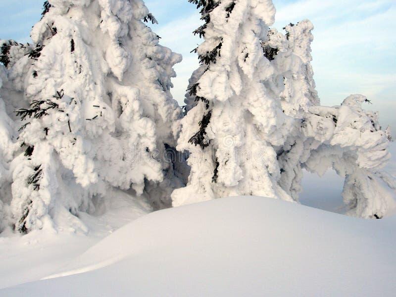 Abete rosso nella neve fotografie stock