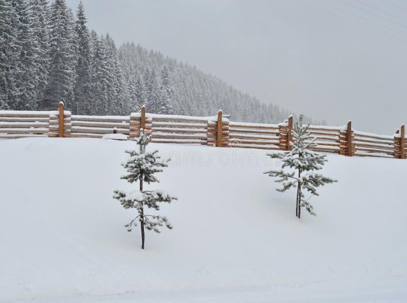 Abeti innevati, fondo di inverno con lo spazio della copia fotografie stock