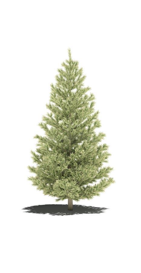 Abeto 3d CG del pino del árbol stock de ilustración