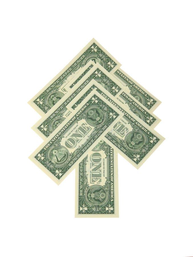 Abeto del dólar imagenes de archivo