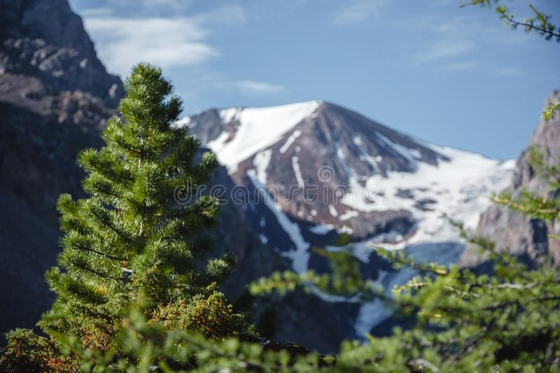 Abeto del primer Montañas pintorescas de Altai en verano Paisaje con un cielo azul sobre las cordilleras y el bosque de la picea foto de archivo