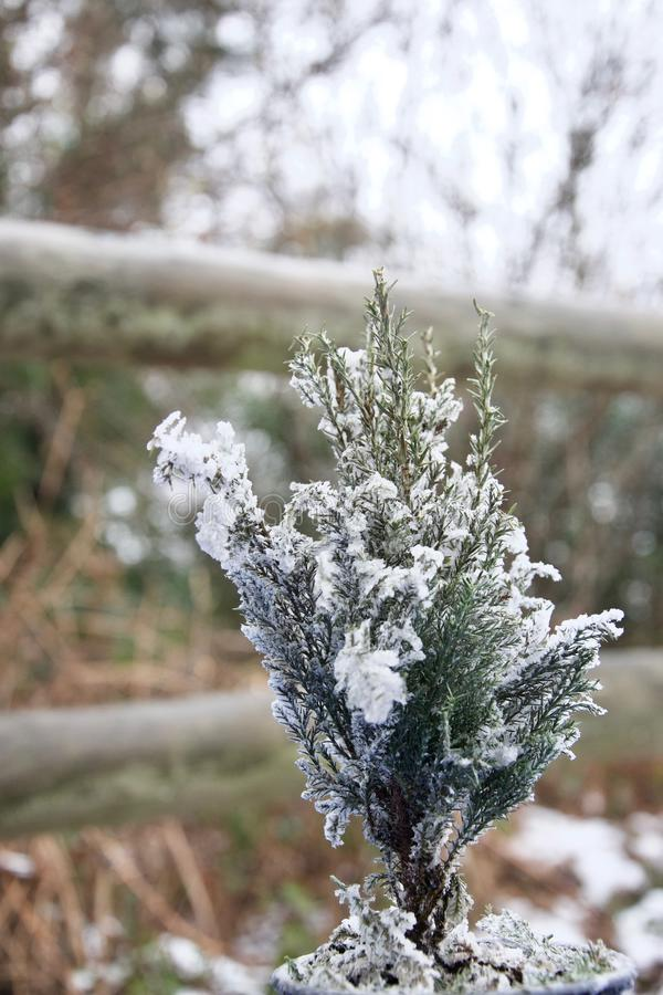 Abeto minúsculo del árbol de navidad sacado el polvo con nieve afuera imagen de archivo