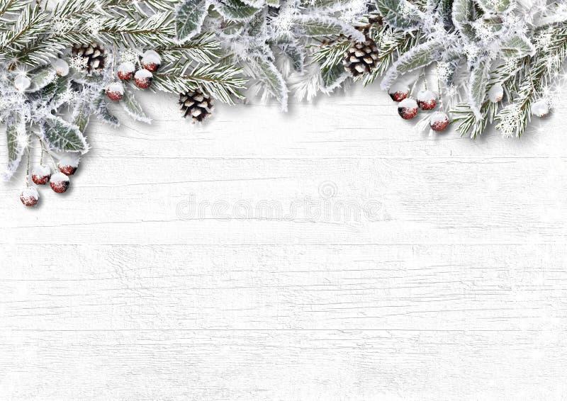 Abeto nevado do Natal com azevinho, cone, geada no branco de madeira imagens de stock royalty free