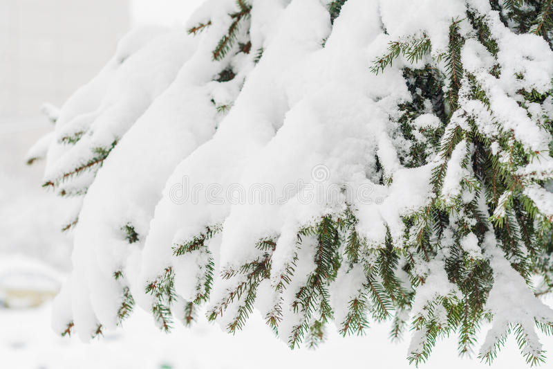 Abeto verde derramado con nieve gruesa imagen de archivo