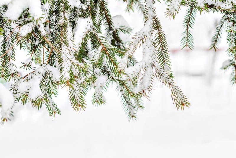 Abeto verde derramado con nieve gruesa foto de archivo libre de regalías