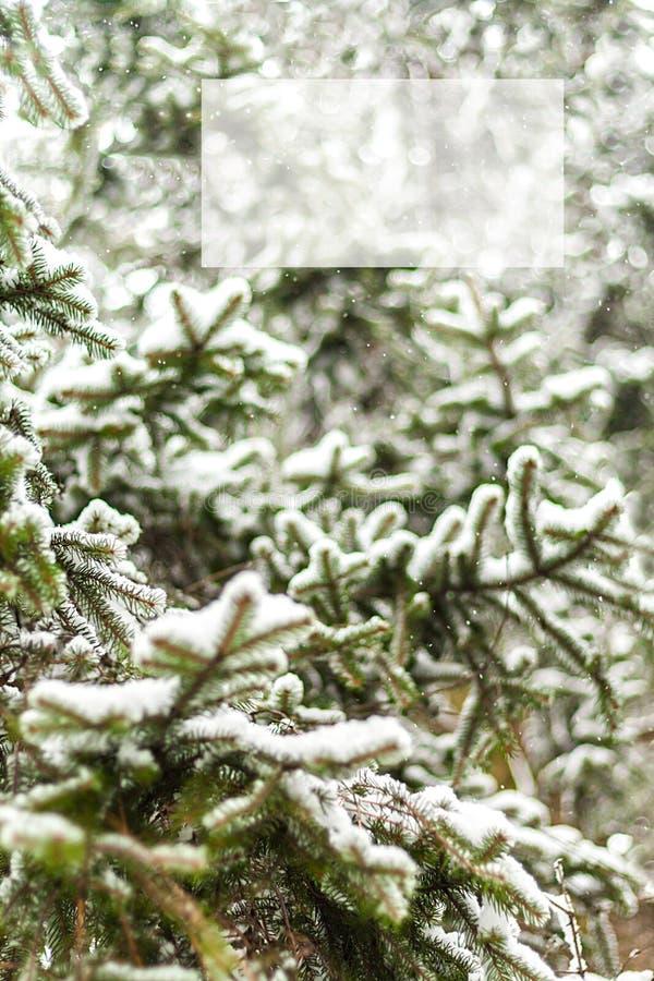 Abeto verde derramado densamente con nieve, y con la inscripción foto de archivo