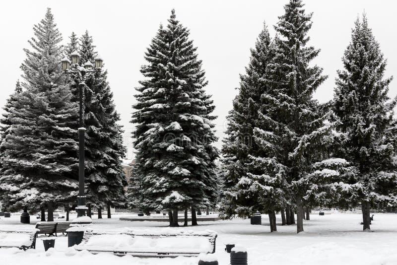 Abeto vermelho coberto com a neve em um parque fotografia de stock royalty free