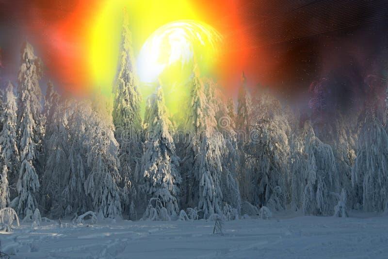 Abeto vermelho coberto de neve e por do sol alaranjado na neve de congelação fotos de stock royalty free