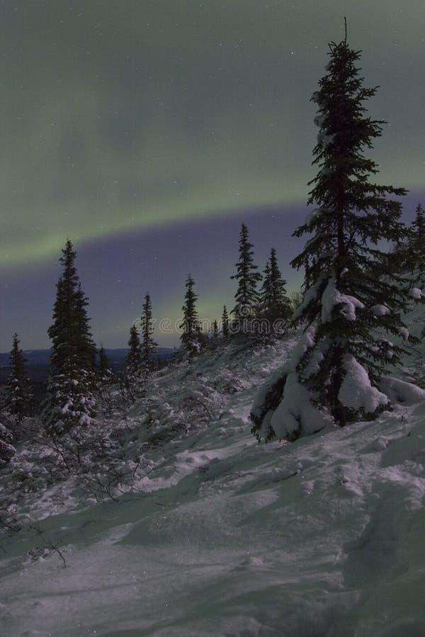Abeto vermelho do landscapewith da noite do inverno imagens de stock