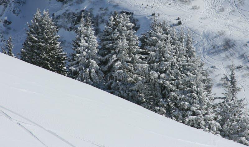 Abetos bajo nieve imágenes de archivo libres de regalías