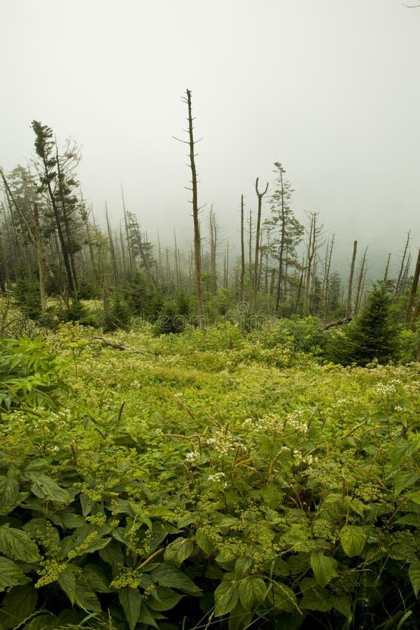 Abetos de Fraser muertos, Wildflowers fotos de archivo