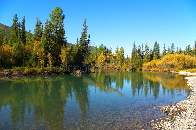 Abetos e lago pequeno. foto de stock