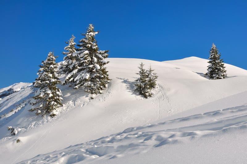Abetos en la nieve foto de archivo libre de regalías