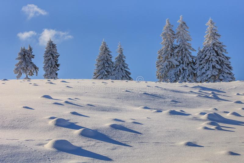 Abetos no inverno imagens de stock