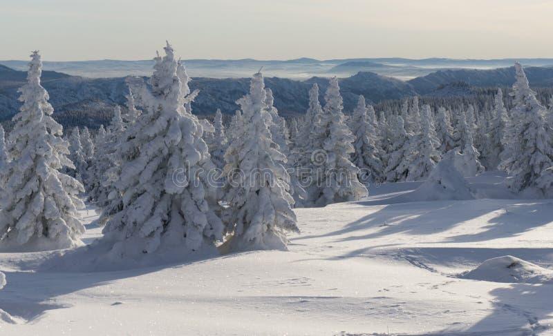 Abetos vermelhos e penhascos nas montanhas Siberian fotografia de stock