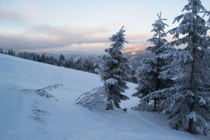 Abetos y arbustos del paisaje del invierno en la nieve imagenes de archivo