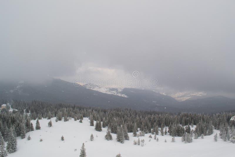 Abetos y arbustos del paisaje del invierno en la nieve imágenes de archivo libres de regalías