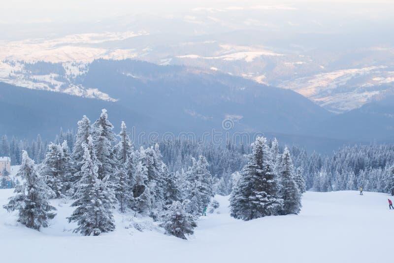 Abetos y arbustos del paisaje del invierno en la nieve foto de archivo