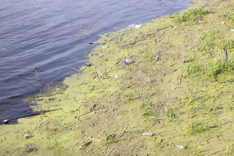 Abfallflöße im grünen Wasser Viele Abfall im Fluss Umweltverschmutzung im See stockfotografie