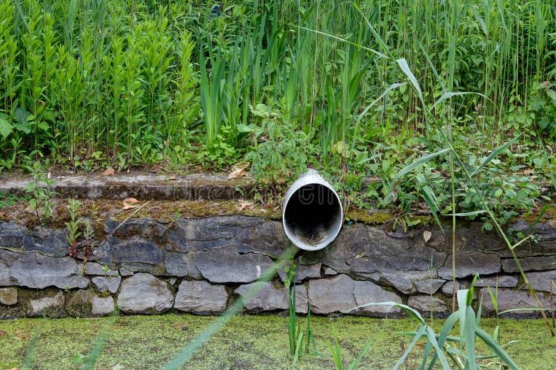 Abflussrohrabwasserkanalreedbankteich stockfotografie