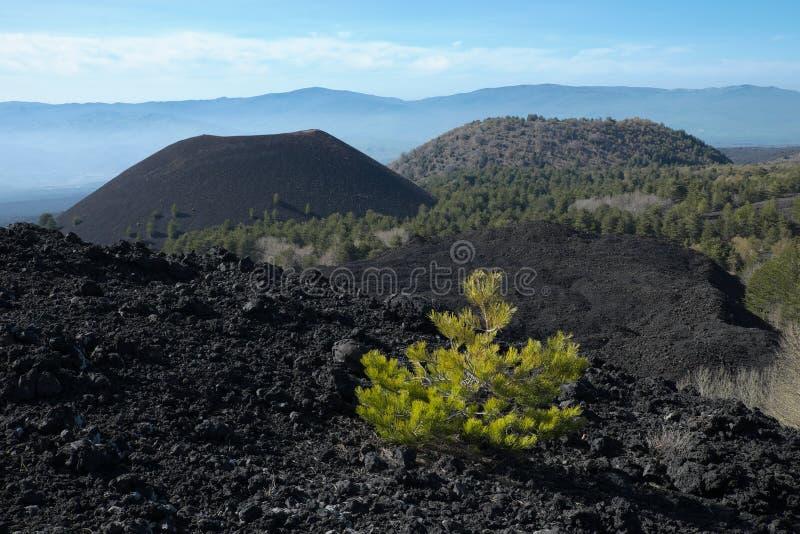 Abgekühlte Lava und vulkanische Kegel in Etna Park, Sizilien stockbilder
