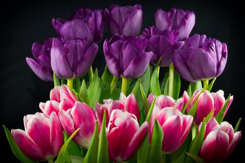 Abgestufte Tulpen stockbild