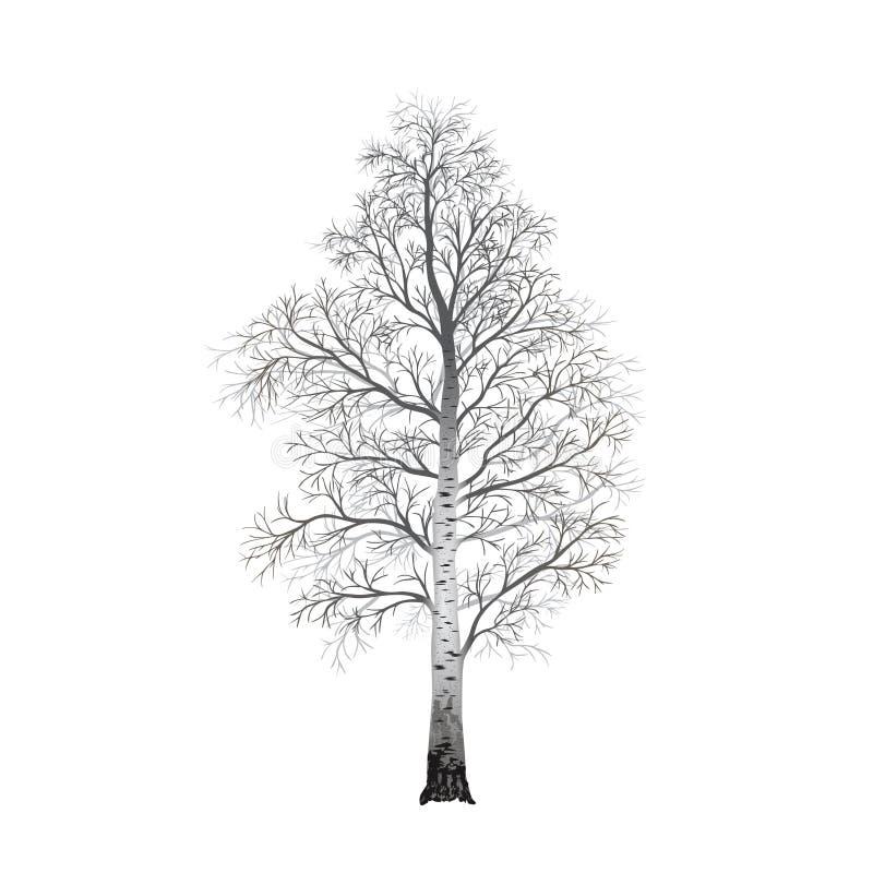 Abgetrennte Baumbirke ohne Blätter, Illustrationen lizenzfreie abbildung