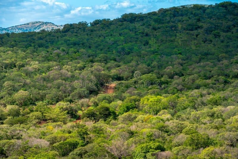 Abhang bedeckt mit grünen Bäumen stockfotografie