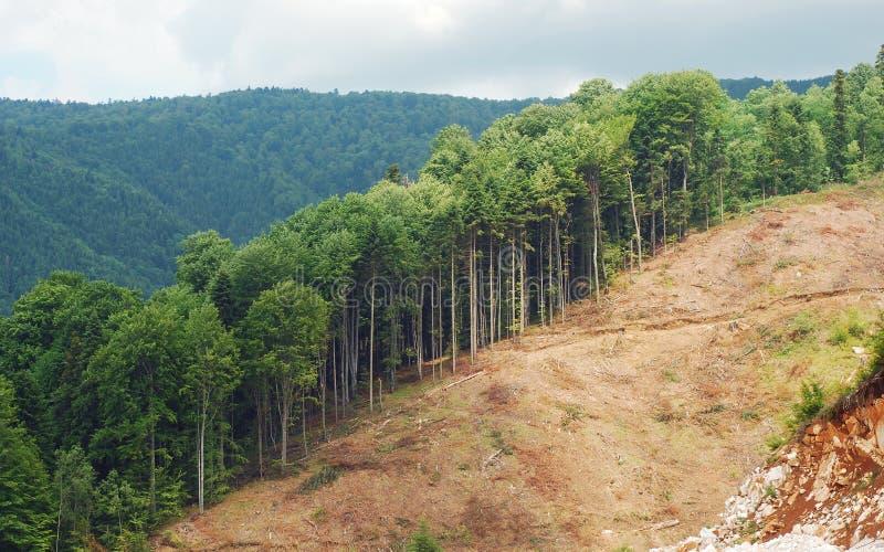 Abholzung lizenzfreie stockfotografie