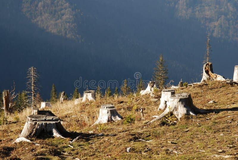 Abholzung lizenzfreie stockfotos