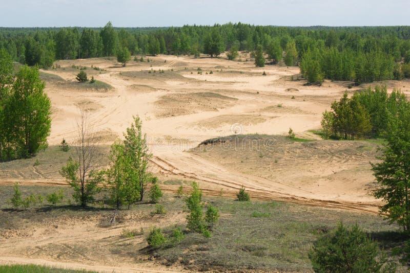 abholzung lizenzfreies stockbild