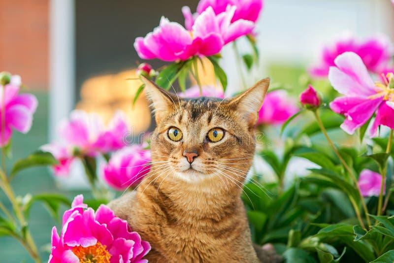 Abisyński kot w kwiatach/portret zdjęcia stock